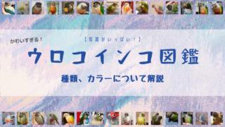 【写真大量!】ウロコインコの図鑑【種類、カラーについて】